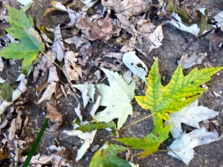 Leavesofgreenandbrown