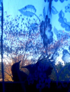 window wrens 3