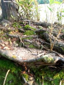 tangledwood