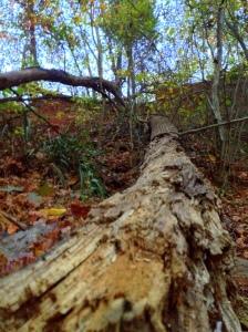 log breaking down