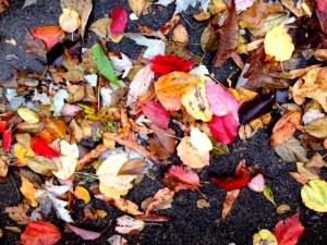 Driveway Leaves
