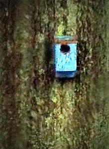bluebirdhome