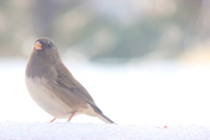 birds portrait