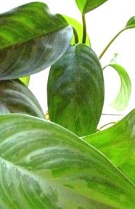 plant up close