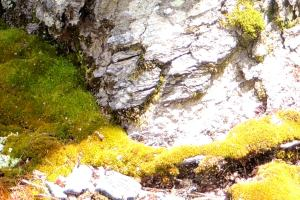 mossand bark