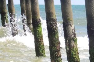 mossy pier2