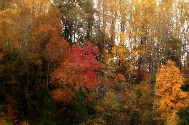autumnrain.JPG