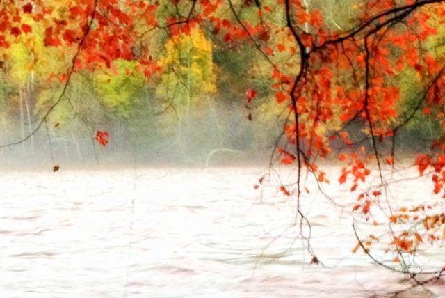 autumnfog