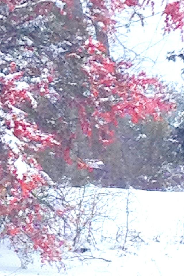 snowday13