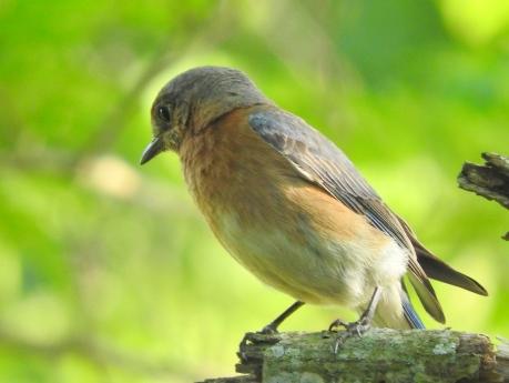 little birds3