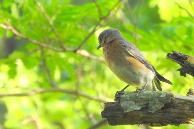 littlebirds4.JPG