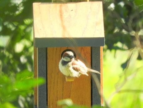 littlebirds6