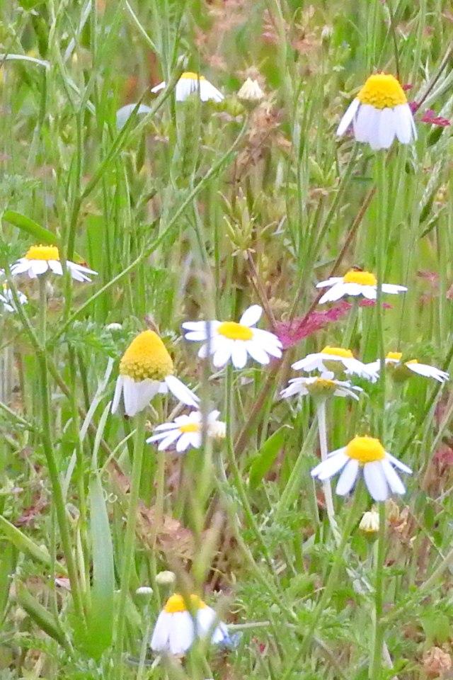 flowersunfolding