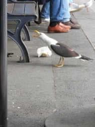 daythreeseagull