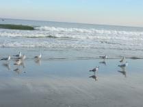 silent sea gulls
