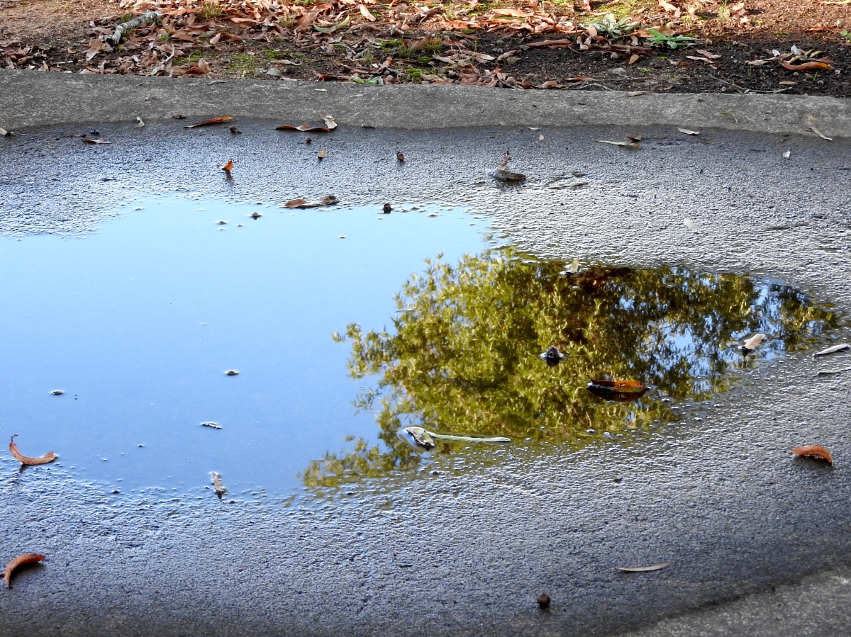puddle full of sky